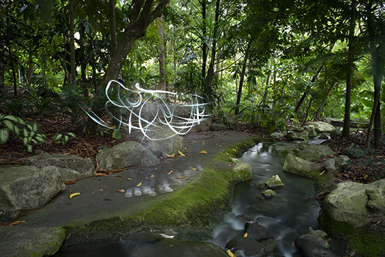 Light streaks in a photo of a wooded green area and a stream