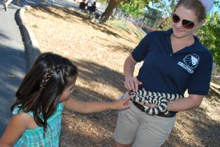young girl visits the zoo and touches a snake held by zoo staff
