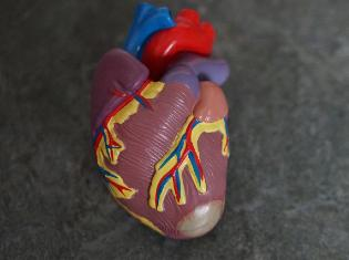 A sculpture of an anatomically correct human heart.